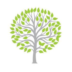 Olive Tree favicon